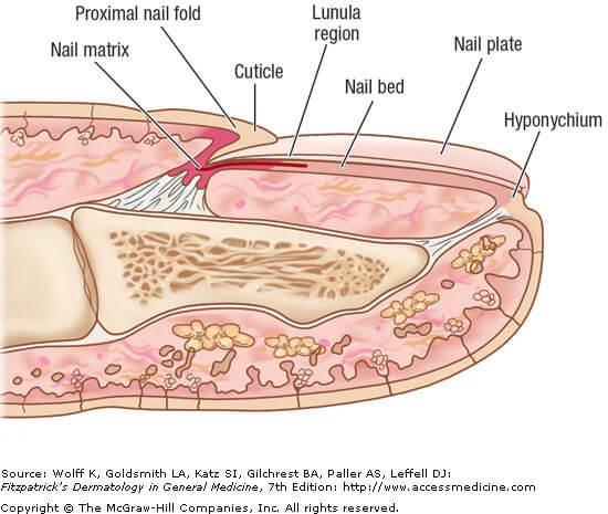 Nails and Medical Health