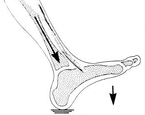 The Third Ankle Joint