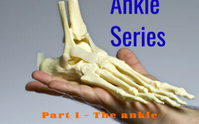 The Ankle and its Role in Walking